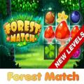 有趣的森林比赛